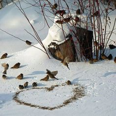 Feeding the birds can be great entertainment!