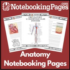 Anatomy Notebooking Pages