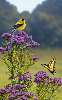 """Goldfinch on Ironweed"" (by artist Larry Zack / Blessed be the Lord, who daily loadeth us with benefits, even the God of our salvation. Selah. Psalms 68:19 Love Birds, Pretty Birds, Little Birds, Birds 2, Yellow Finch, Yellow Birds, Purple Yellow, Colorful Birds, Finches"