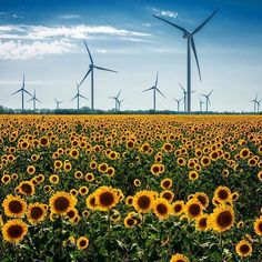 Creates electricity by spinning the turbine inside as the windmill spins. Renewable Energy, Solar Energy, Solar Projects, Solar Power System, Wind Power, Worlds Of Fun, Windmill, Insta Pic, Wind Turbine