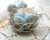Lovely blue eggs