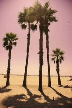 Palm trees....just because.