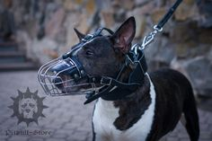 Basket Dog #Muzzle for Visiting Vet with your #BullTerrier