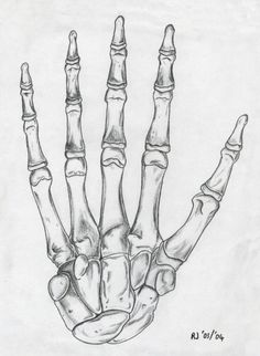 Skeleton hand drawing.