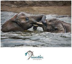 Pittsburgh Zoo - Elephants www.nicdreamcatcher.com ©Nicole Iagnemma