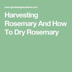 cbf9aabbdd Harvesting Rosemary And How To Dry Rosemary How To Dry Rosemary