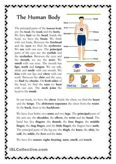The Human Body 511791945153017936 worksheet worksheet fo. The Human Body 511791945153017936 worksheet worksheet for kids worksheet student worksheet Human Body Systems, Human Body Parts, English Exercises, English Reading, Mini Reading, Comprehension Worksheets, Teaching Jobs, Teaching Ideas, Good Day Song