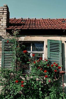 Cottage love of the shutters and the roses at the window...