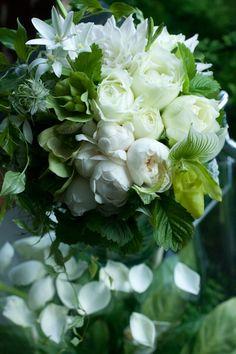 アイロニー ~Jardin du I'llony~ Photo Gallery
