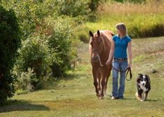 Omega Fatty Acids: What do they do for horses?