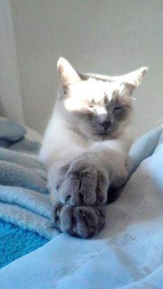 """""""If there is one spot of sun spilling onto the floor, a cat will find it and soak it up."""" --J A McIntosh"""