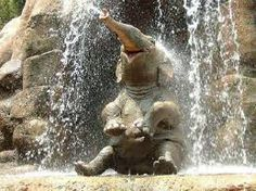 Most of us don't like showers...But elephants on the other hand...