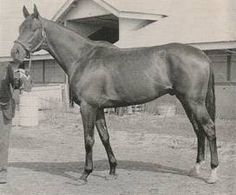 Full information about the sporthorse pedigree for Iron Liege: including competition results, photos, videos, progeny, pedigree analysis. Calumet Farm, Horse Racing, Race Horses, Derby Winners, Horse Names, Thoroughbred Horse, Show Horses, Courses, Kentucky Derby