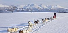 Go on a dog sledding trip in Kvaløya in Troms, Northern Norway - Photo: Bård Løken/NordNorsk Reiseliv