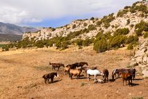 Photo of Wild Horses in Flaming Gorge Area of Wyoming - source: iStockphoto