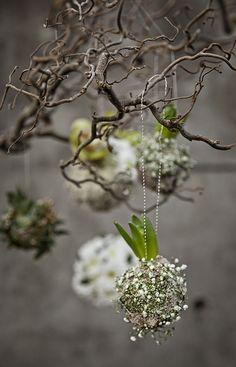 Hyacinten met gipskruid