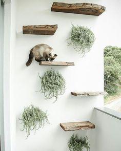 🐈 Moment #catlady de la semaine: on veut cet arbre à chat mural! #catlady moment of the week: we want that cat tree!