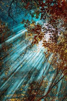 """""""To a mind that is still,  the whole universe surrenders. ~Lao Tsu   Brighten the world with a heart that shines with goodness and love, with quotes from 3 aged sages; Hafez, Barrie + Lao Tzu.  Blog Beau Monde - mindful, conscious living, spirit, soul."""