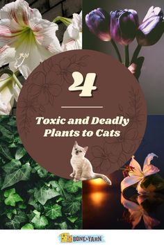 Cats love to explore and be curious whether it's inside or outside, but sometimes being curious can be dangerous for them. Certain plants and flowers are toxic and can be harmful. Here are 4 toxic and deadly plants your cat should stay away from and 15+ plants and flowers that are safe. #toxicplantsforcats #catfriendlyhouseplants #catfriendlyplants #catfriendlyplantsindoors #catfriendlyplantsoutdoors