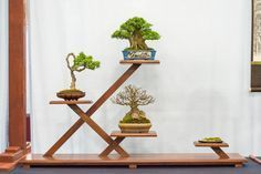 Highlights from the 5th US National Bonsai Exhibition featuring creative approaches to displaying shohin bonsai with alternative stands.