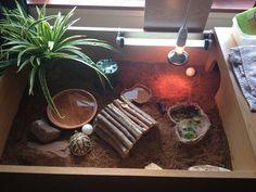 Tortoise table enclosure