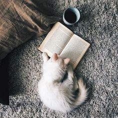 Мой кот начинает каждое свое утро с чашечки кофе и хорошей книги — Его Величество Кот