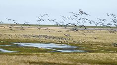 Wadden Sea National Park or Nationalpark Vadehavet in #Denmark | Ferry Crossings. Wadden Sea is on the west coast of Denmark, very close to the ferry port of Esbjerg.