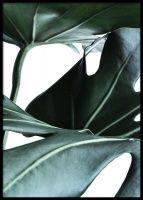 Big Monstera Poster i gruppen Posters / Botaniska hos Desenio AB Gold Poster, Blue Poster, Buy Posters Online, Art Online, Prints Online, Birds Flying Away, Photo Macro, Poster Photo, Modern Art Prints