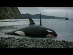 ORCA - A baleia assassina( Dublado )