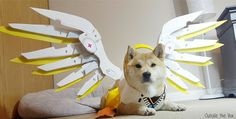 Mercy Doge by @Outside_the_Vox