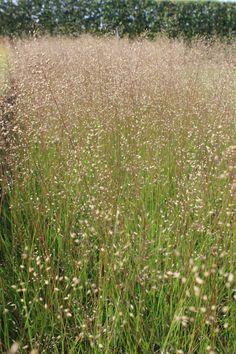 Clay Soil Plants, Grasses, Impressionist, Trees, Van, Outdoors, Gardening, Flowers, Gardens
