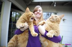 You will not believe these 15 (Very!) large cats that do not doubt how cool they are! Animal Gato, Mundo Animal, Animals And Pets, Funny Animals, Cute Animals, Angry Animals, Maine Coon, Funny Cat Memes, Funny Cats