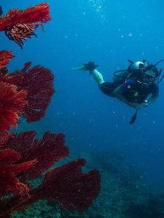 Magnificent underwater world..dive at Ratu Kini