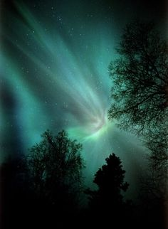 "Talkeetna, Alaska - ""Treetop Crowning"""