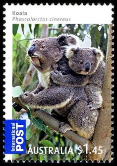 Collecting Australian koala stamps...the next best thing to going there!