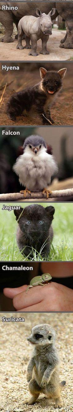 funny-baby-animals-cougar-rhino