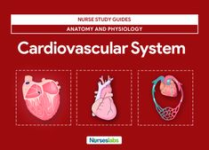 Featured-Cardiovascular System Anatomy and Physiology