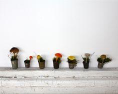 Mushrooms in vintage thimbles. Resurrection Fern. August 05, 2010