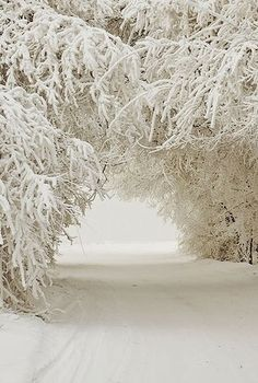 Snow Trees, I have seen a similar site when out skiing, it's breathtaking; )