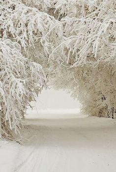 Winter Wonderland ..