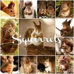 Squirrels | Notre Belle Nature
