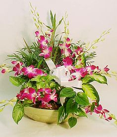 Ceramic Dish Garden with Fresh Orchids-A beautiful 14 inch ceramic container is filled with an assortment of lush house plants and accented with 8 stems of gorgeous Fresh Cut Dendrobium Orchids. Get Well Flowers, Orchid Bouquet, Ikebana Arrangements, Beach Flowers, Dendrobium Orchids, Dish Garden, Easter Flowers, Same Day Flower Delivery, Virginia Beach
