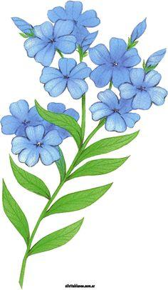 http://www.silvitablanco.com.ar/flores/ilustraciones.htm