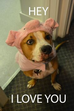 This little piggy who went wee, wee, wee all the way TO OUR HEARTS. | 33 Terrifyingly Adorable Pit Bulls