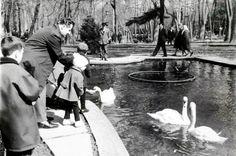 Kuğulu Park 1959