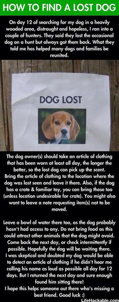 How to find your lost dog. Seems like it could really work. It certainly couldn't hurt.