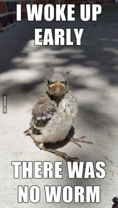 Grumpy bird - This may be the face I make each morning too!