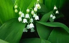 Lily of the Valley or (Muguet) in Silk & Ivory