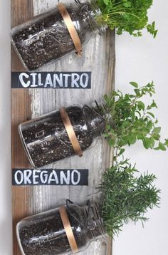 mason jars as wall-mounted herb garden.