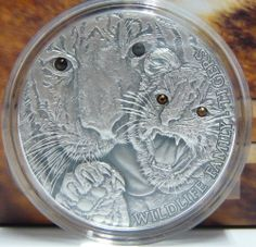 TIGERS silver coin high relief 4 orange swarovski eyes Wildlife Family Niue 2013